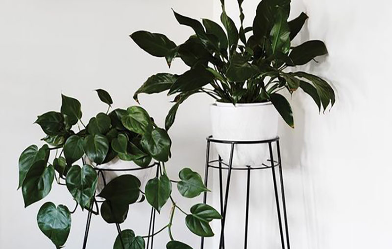 These 5 Indoor Plants Also Come With Health Benefits
