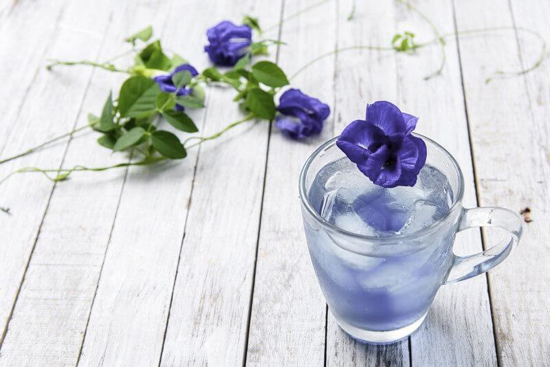 Blue Butterfly Pea Flower – the Next Superfood Must Have