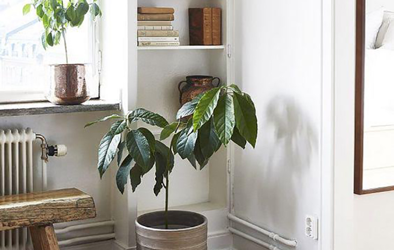 The 5 Plants you should have in your Home