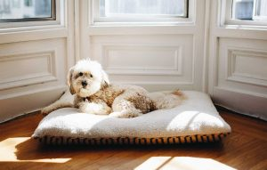 Five benefits of working from home as a pet owner